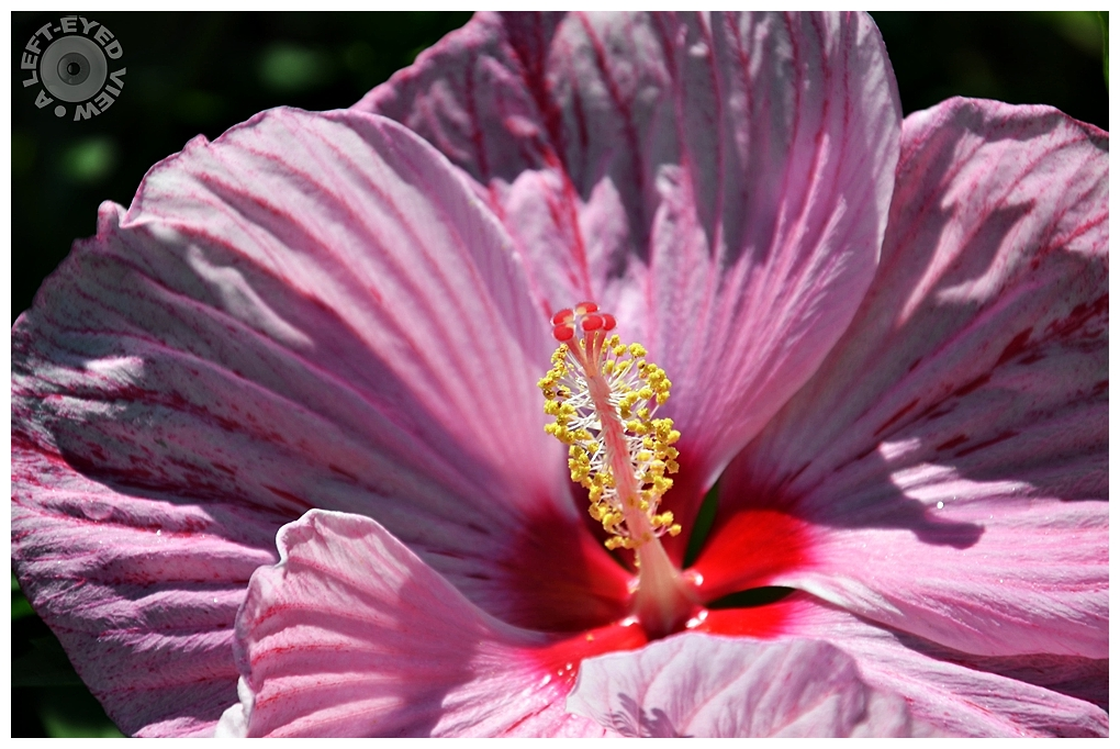 """""""A Left-Eyed View"""", """"Peppermint Schnapps Hibiscus"""""""