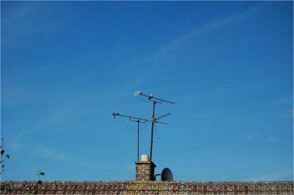 Pigeon's On TV