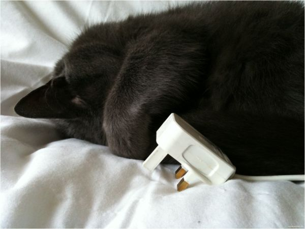 Power/Cat Nap