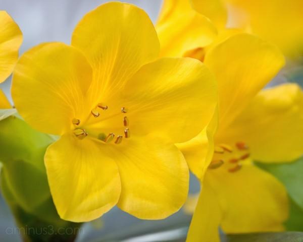 Yellow flowers at the Atlanta Botanical Garden