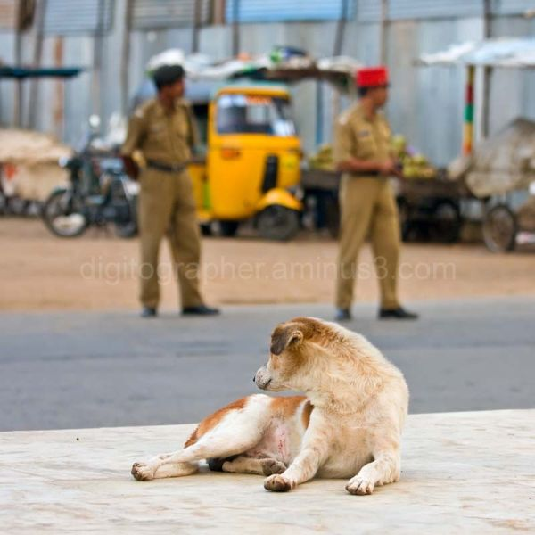 Dogs and police at Gandhi Square