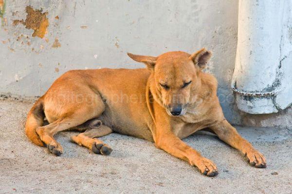 Dog on sidewalk in Pondy