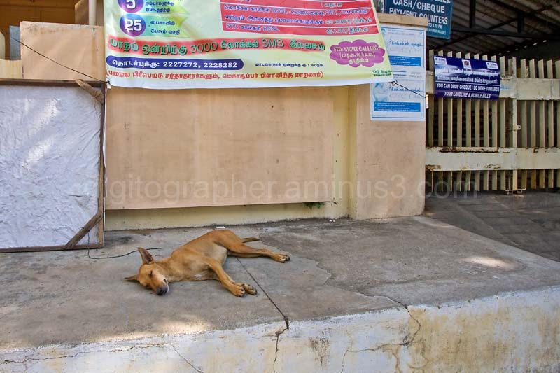 A dog on the sidewalk in Pondy
