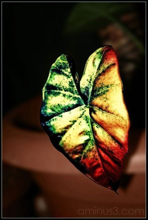 Manipulated leaf