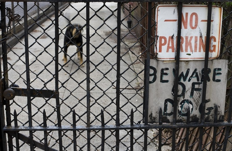 Beware of Wagging Tail