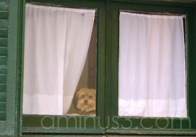 Mirant per la finestra