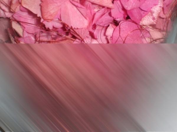 Els colors de les hortensies.