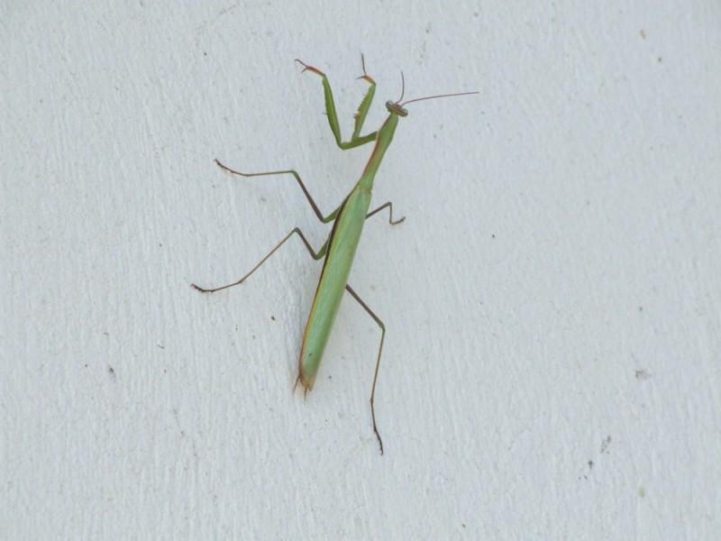 Grasshopper ( 4 Dast )