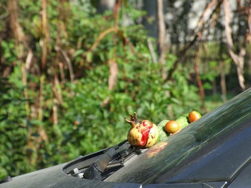 Photo Fruitery Bye Saeed Rasoulof