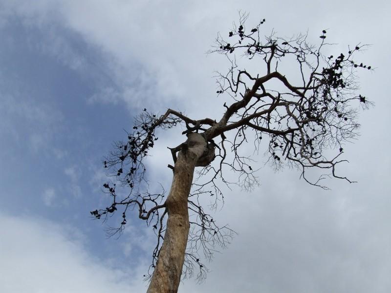 Tree Sleep