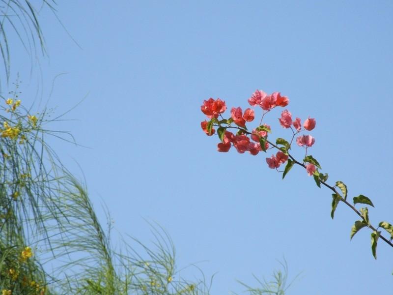Blue Sky & Beautiful Flowers