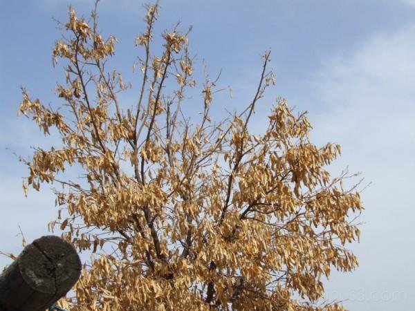 Dry Tree #2
