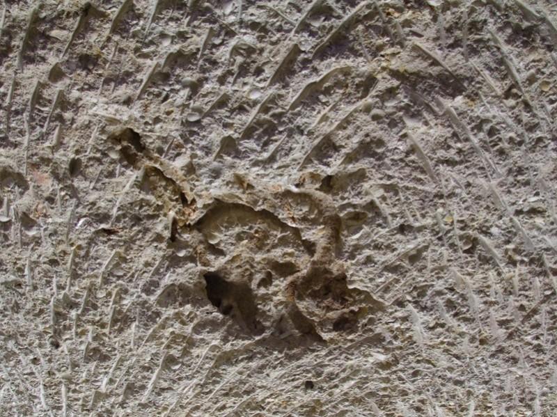 Tortoise Fossil