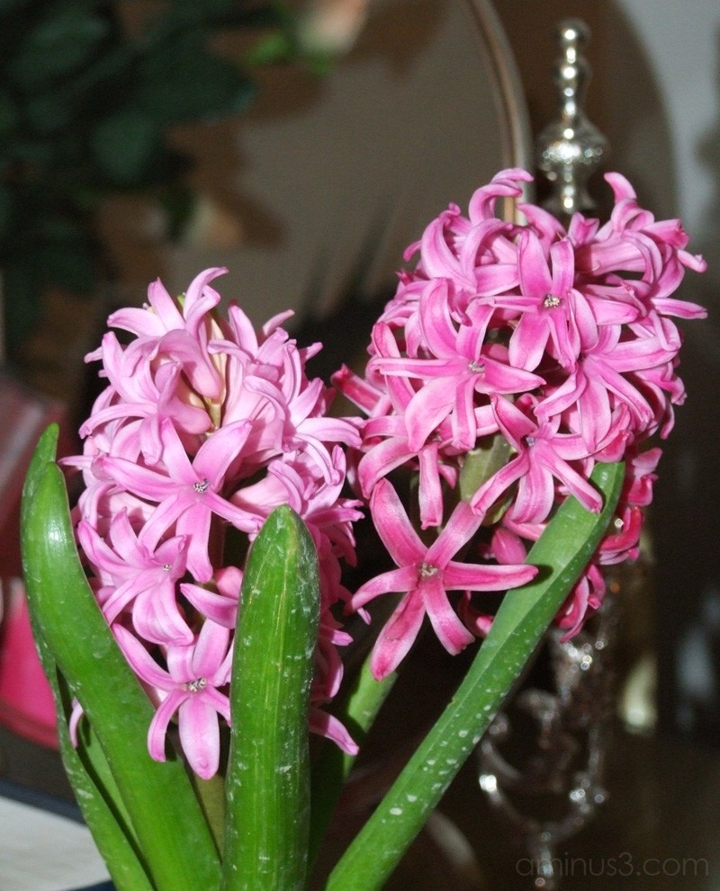 Sonbol . . . Nice Flower . . .