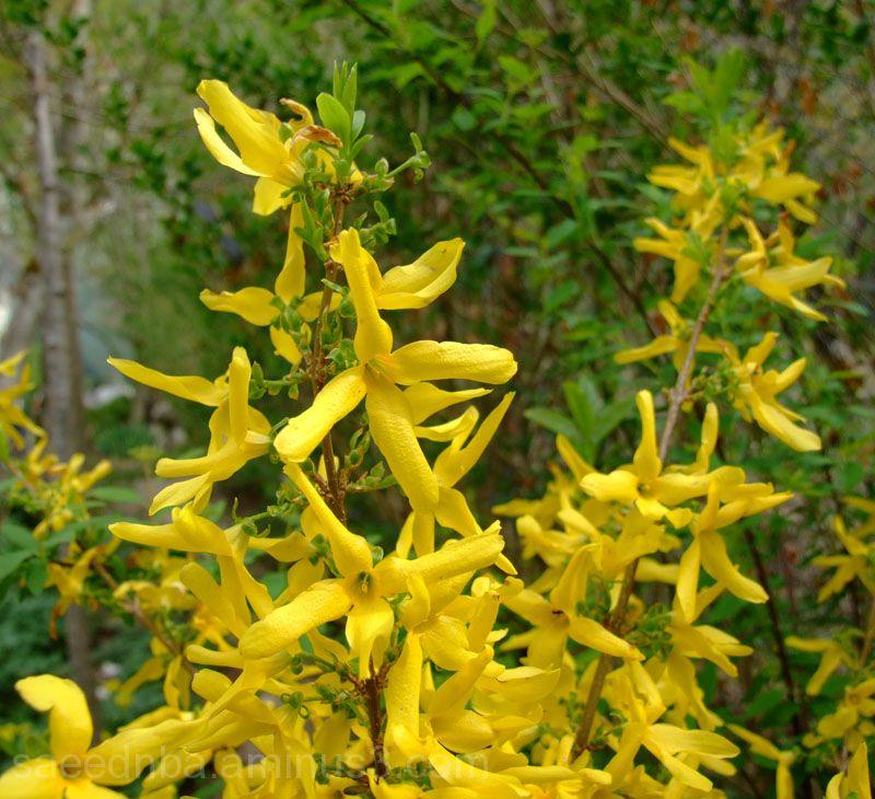 Yellow . . .