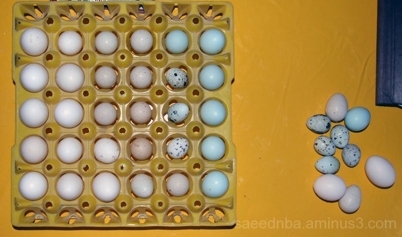 Eggs ! ! !