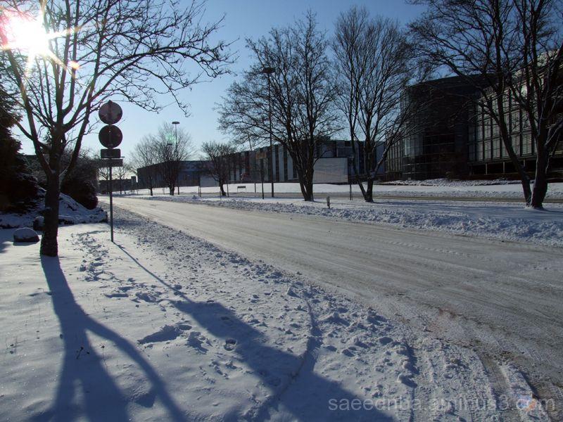 Cold Day , Warm Sun !