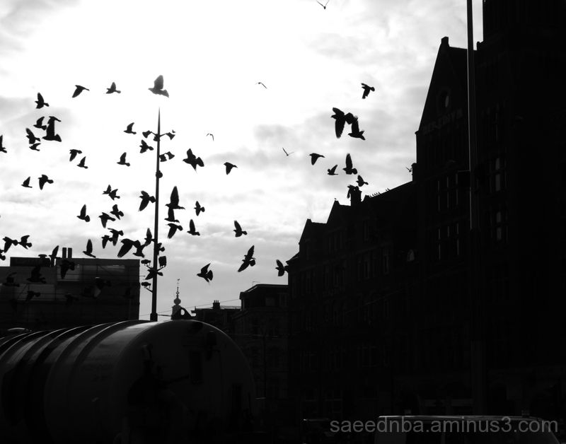 Amsterdam #5 (Flying To Light)