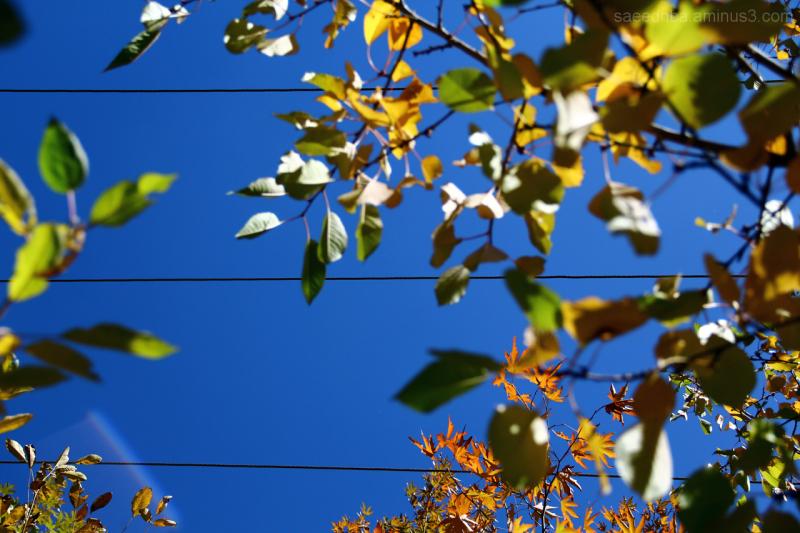 Autumn . . .