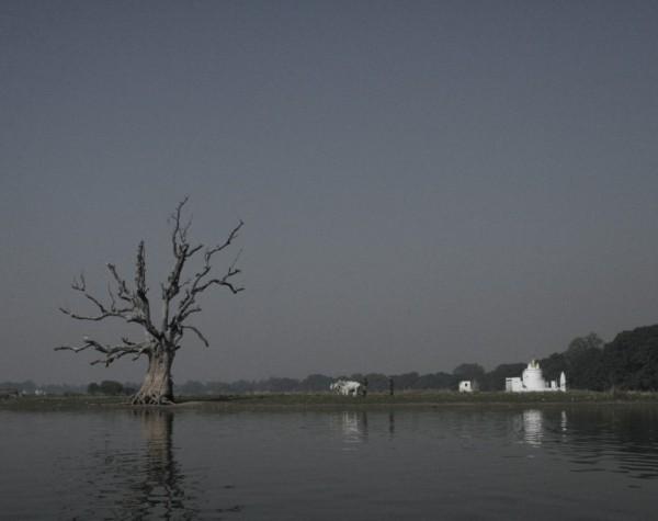 Dead tree. Myanmar.