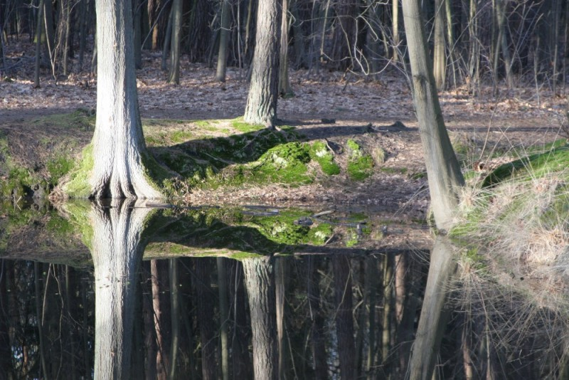 Reflection of trees.