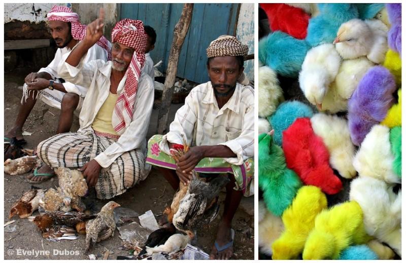 Poussins M & M's au marché yéménite