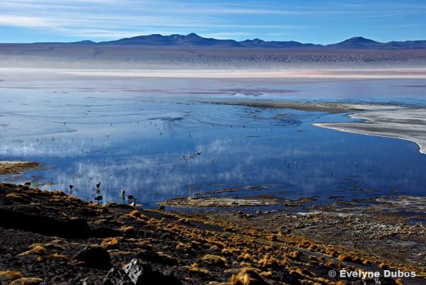 Fraicheur matinale (Bolivia)