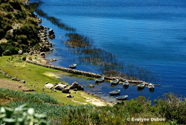 Harmony in Green and Blue (Titicaca-Bolivie)