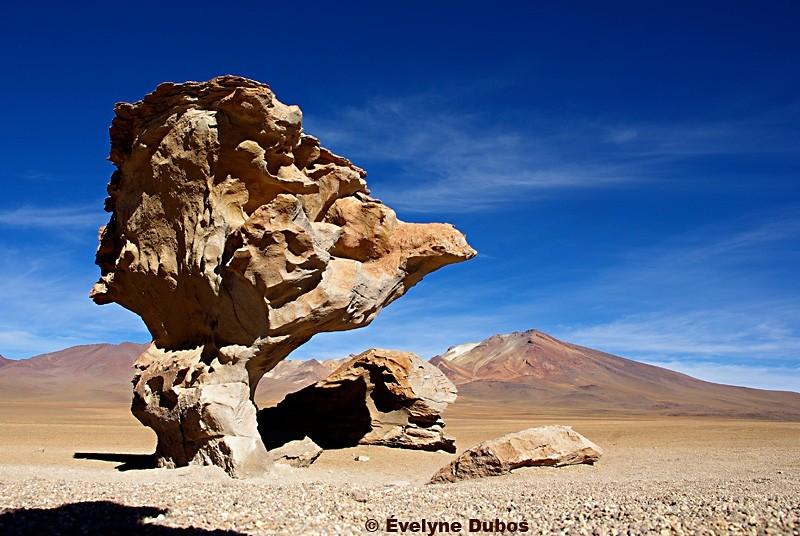 A weird mushroom. (Bolivia)