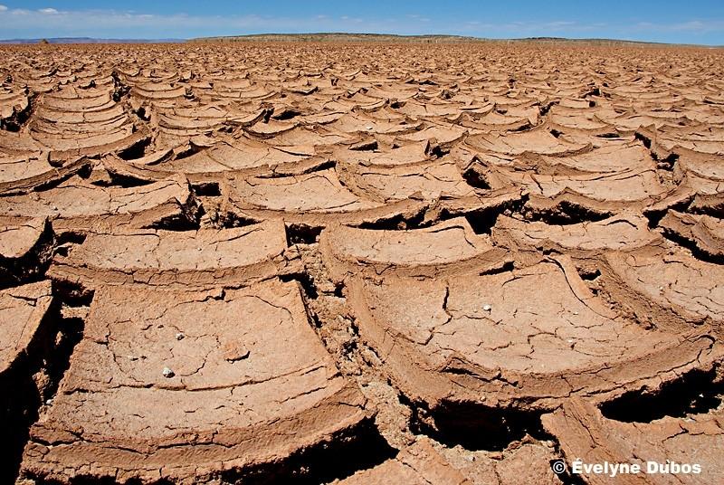 Dryland - (Bolivia) -