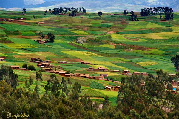 Patchwork -2-  (Peru)