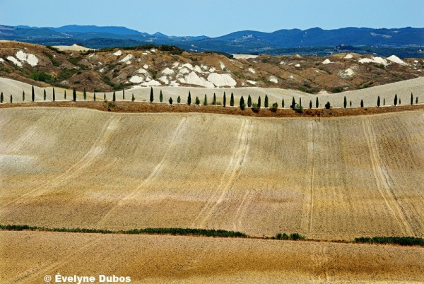 Tracks  (Tuscany - Italy -)
