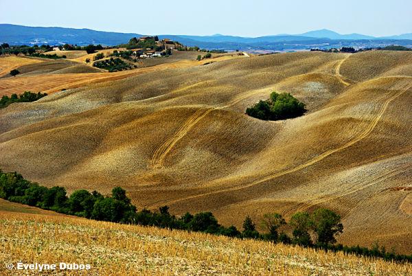 Tracks (3)  -Tuscany-