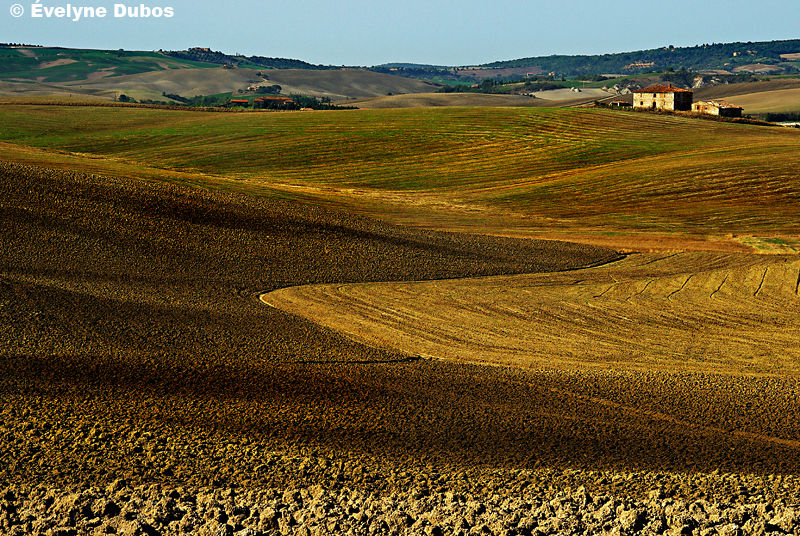 Tracks (4)  -Tuscany-