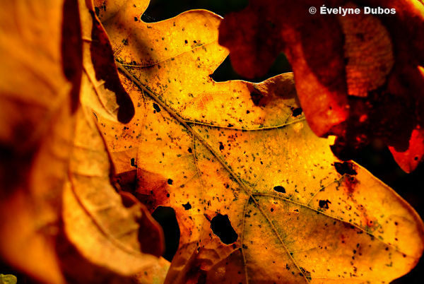 Seeing that it's autumn... (1/3)