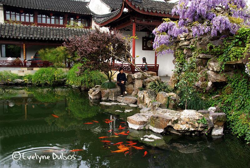 Chinese garden (Suzhou)