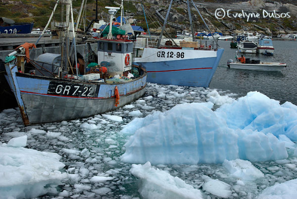 Dans le port d'Illulissat...