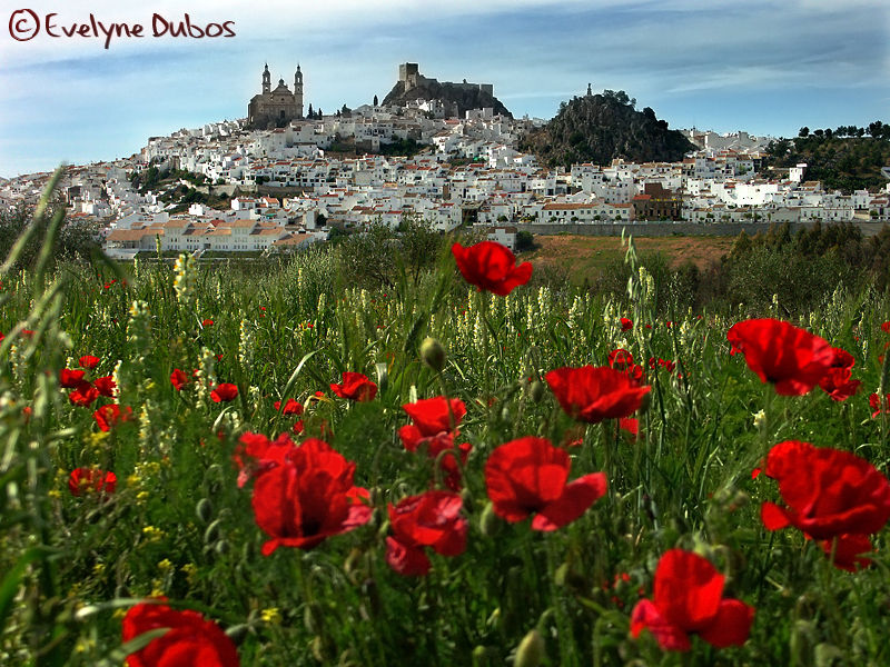 White villages of Andalusia  -1-  (Spain)