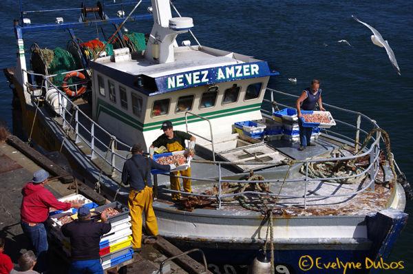Retour de pêche  (2)