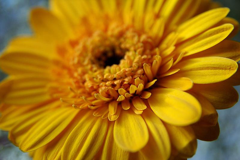 Chromothérapie : Jaune soleil