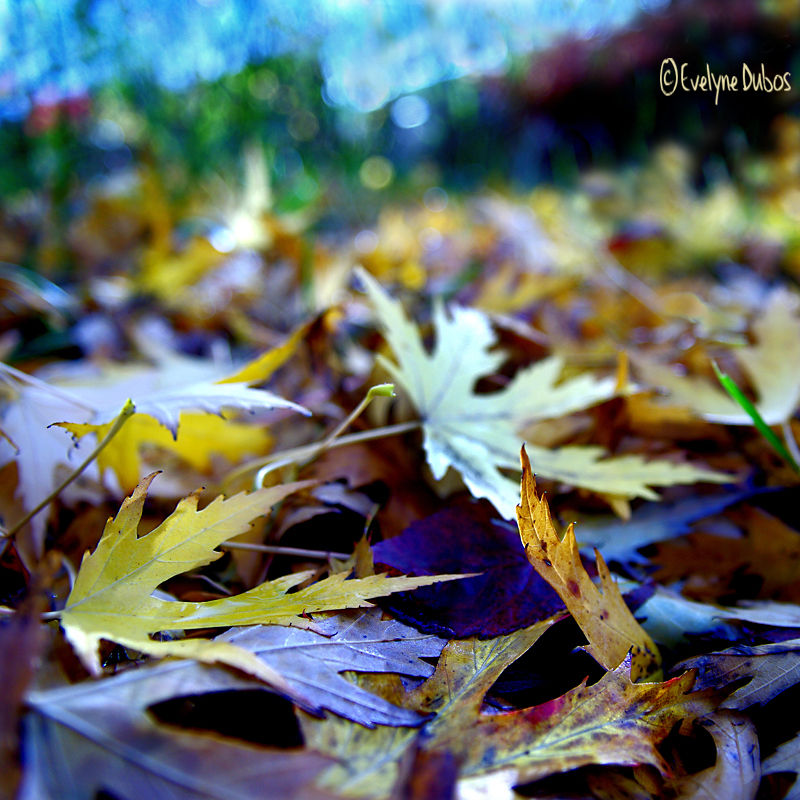Novembre au jardin.