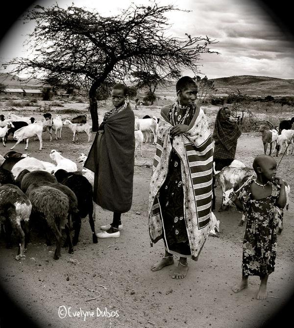 Le retour du troupeau.  (Village Masaï-Kenya)