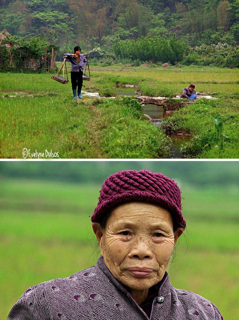 Dans les rizières... (Chine)