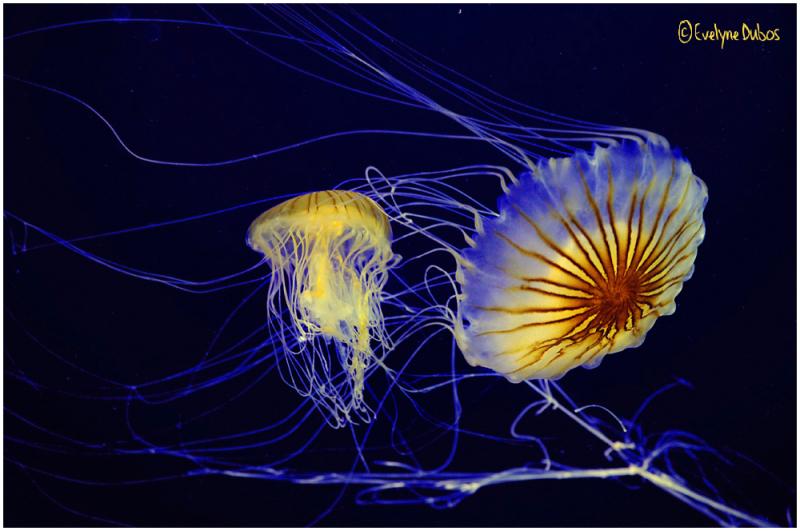 A3-THÉRAPY(101) : Danse avec les méduses.