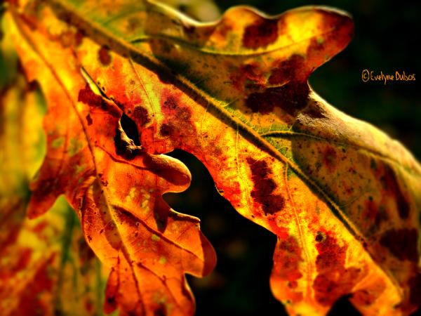 A3-Thérapy(93) : Lumière d'automne.