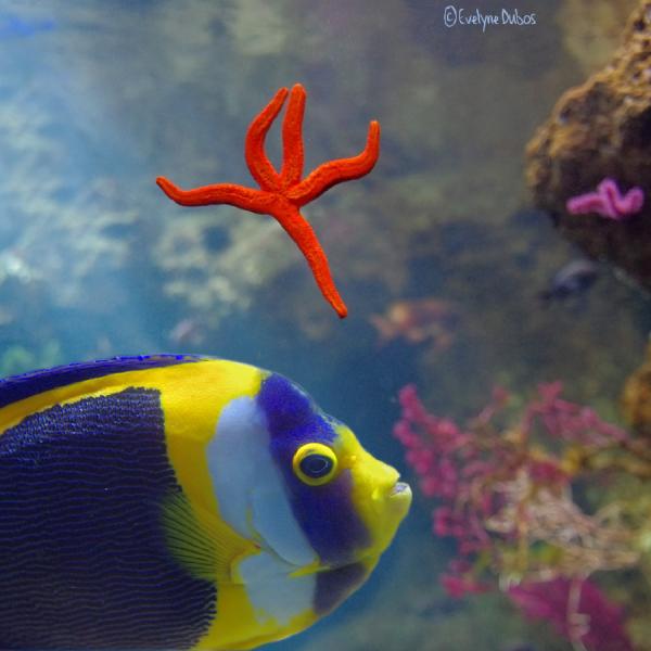 L'étoile et le poisson