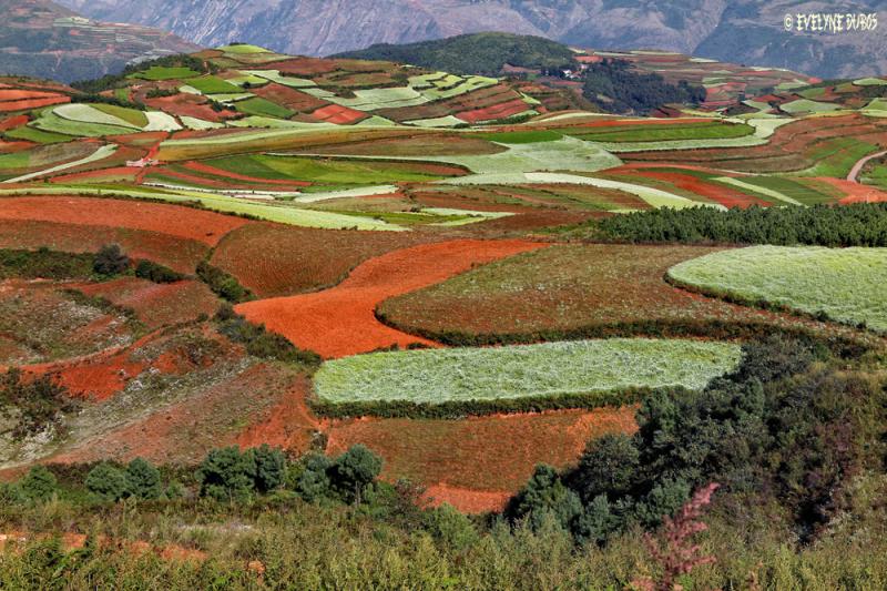 LAND'ART : Les Terres Rouges De Lexiaguo (1)