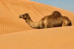Des dunes et des bosses.