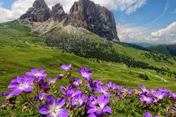 Les Dolomites en fleurs.