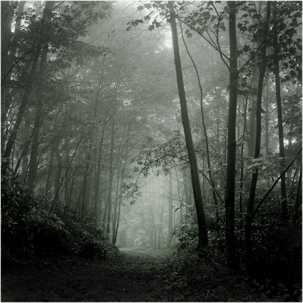 Path through the woods...